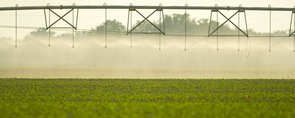 Irrigation on field
