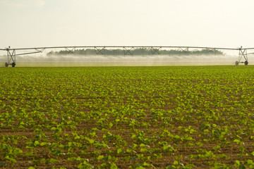 Irrigating crops in field