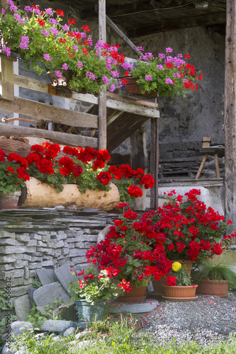 Cottage flowers