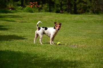 Dog Rony