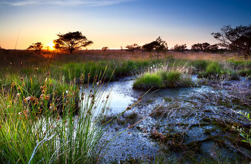 sunset over swamps in summer