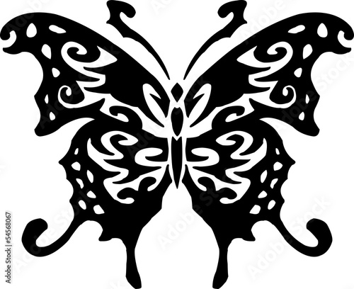 hand drawn butterfly on white