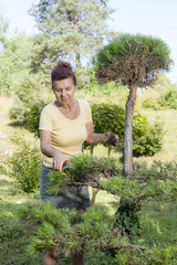 Cute woman trimming bonsai tree