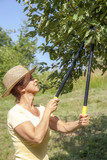 Woman trimming the apple tree