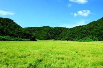 山に囲まれた牧草地