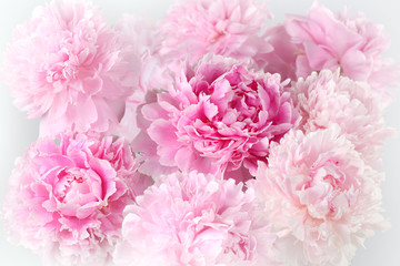 Floral background of pink peonies varieties Albert Kruss
