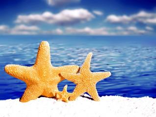 Морские звезды на фоне  моря