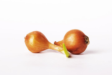 Two bulb onions, including one germinating.