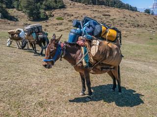 Laden mules