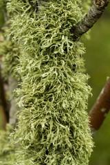 covered in lichen