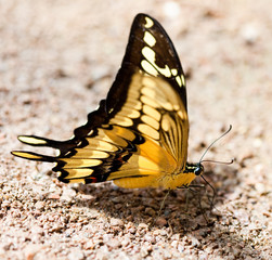 beautiful butterfly on stone and sand
