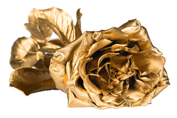 Isolated golden rose
