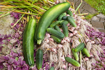 cucumbers, zucchini and garlic crops