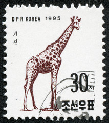 stamp printed in North Korea shows a Giraffe
