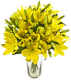 bouquet of yellow lilias in vase on white background