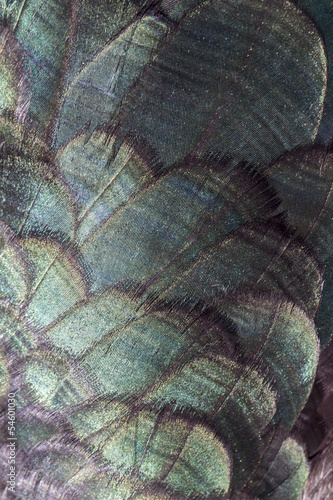 Close up view of duck feathers texture.