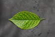 green leaf on a black leather background. macro