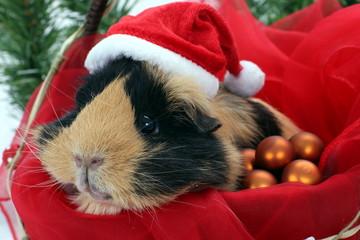 Santa Claus Meerschweinchen im Korb mit Mütze