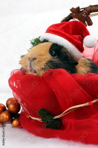 weihnachtliches meerschweinchen mit hut stockfotos und. Black Bedroom Furniture Sets. Home Design Ideas
