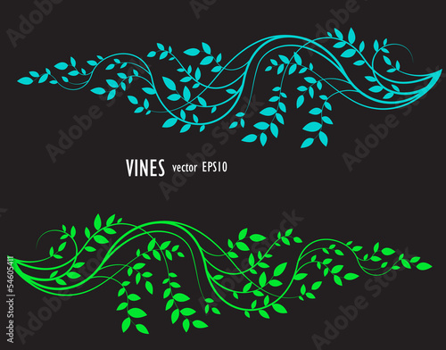 silhouette of vine and leaves, floral decorative element