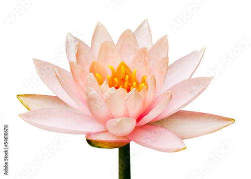 Fotobehang Lotusbloem Lotus flower isolated