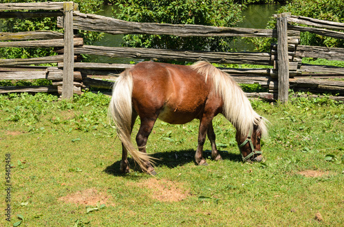 Pony grazing in field