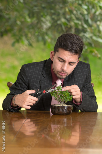 Man is trimming a bonsai tree
