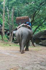 back of Thai elephant, Chiang Mai, Thailand