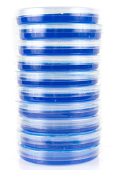 Stack of Petri Dishes