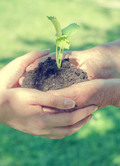 Elderly and young female hands holding soil with sprout