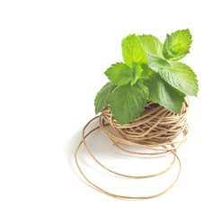 Mint leaves in coil of rope isolated on white background
