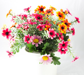 Colourful flowers in a pot