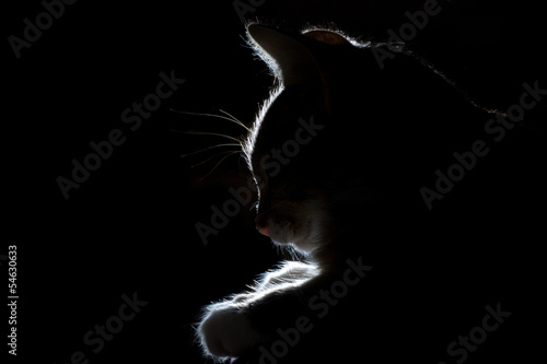 silhouette of a beautiful sleeping cat on a black background