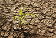 canvas print picture - Drought, dry earth