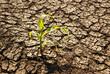 Leinwanddruck Bild - Drought, dry earth