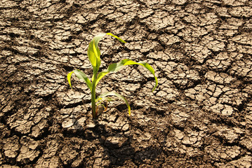 Drought, dry earth