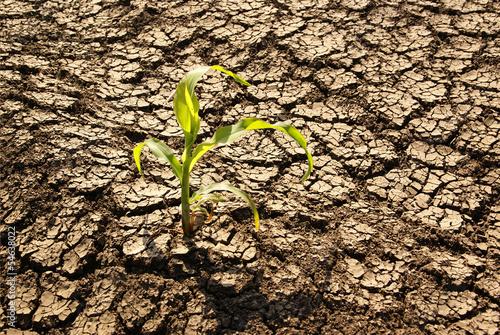 Leinwanddruck Bild Drought, dry earth
