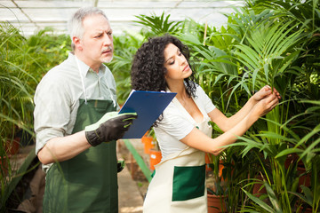 Workers examining plants