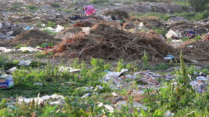 Scavenging for food in a waste dumping site