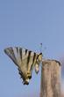 Open wings butterfly portrait