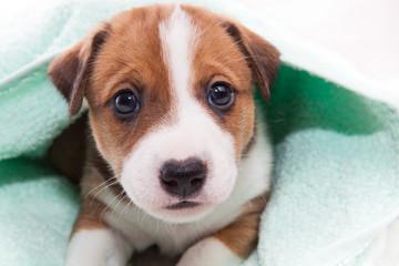 puppy after bath