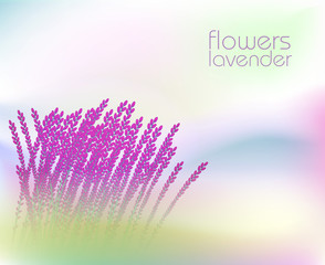 Abstract background with  lavender