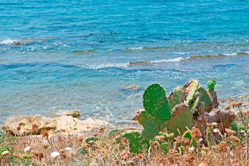 prickly pears by the sea
