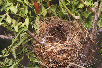 A beautiful natural empty birds nest in a tree