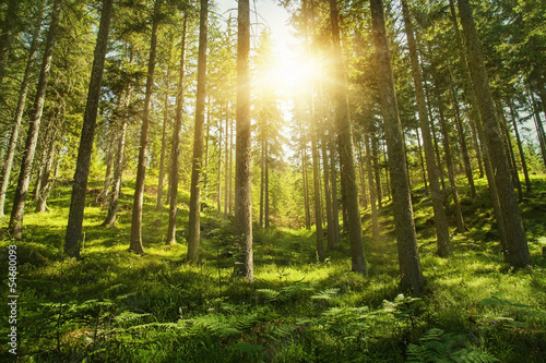 Sunny forest