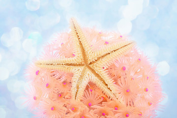Sea star over pink coral