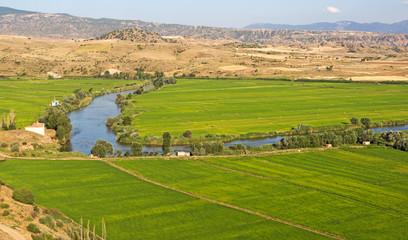 Reisfelder entlang des Flusses Kızılırmak