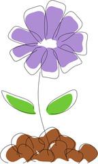 Vector illustration - Cornflower drawing