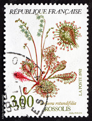 Postage stamp France 1992 Common Sundew, Carnivorous Plant