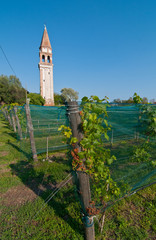 Venice Burano Mazorbo vineyard